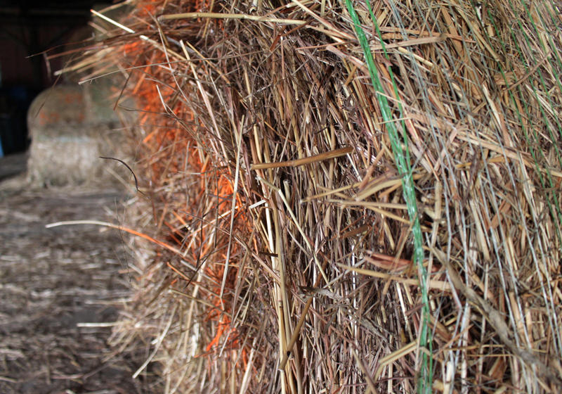 Cellulosic ethanol is made by breaking down the cellulose, or building blocks, in the stems and leave of plants like this switchgrass. Some other materials used to make cellulosic ethanol are wood, corn stalks, wheat straw, and algae.