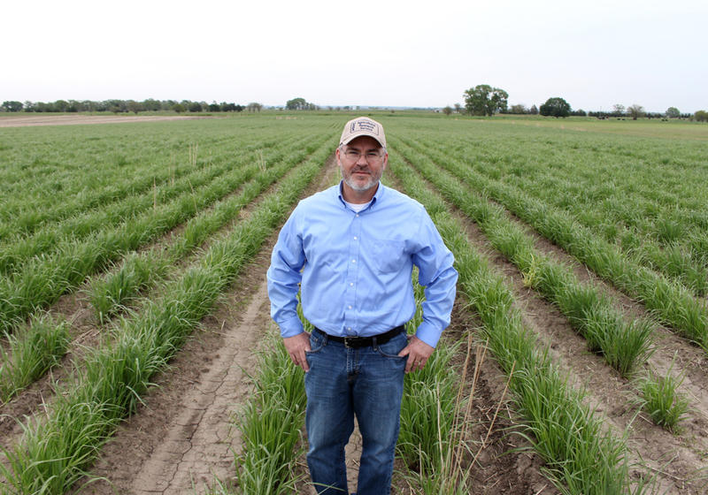 Mitchell stands in a field of switchgrass grown to make ethanol. Switchgrass is knee-high by the end of May but can grow as high as 10 feet.