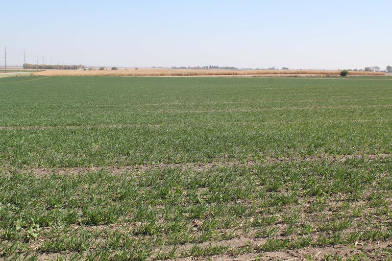 Cover crops are one conservation measure that helps keep farmland nutrients in the soil and out of the Gulf of Mexico.