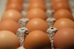 Egg production is down because avian flu has decimated the flock of laying hens.