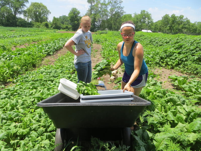 UNI students Sarah Freeze (left) and Natalie Rork use a cart to transport produce