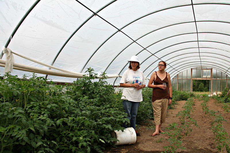 Farmers Margot McMillen and Julie Wheeler check on their tomato plants, which they moved into a greenhouse to protect from unwanted pesticides.