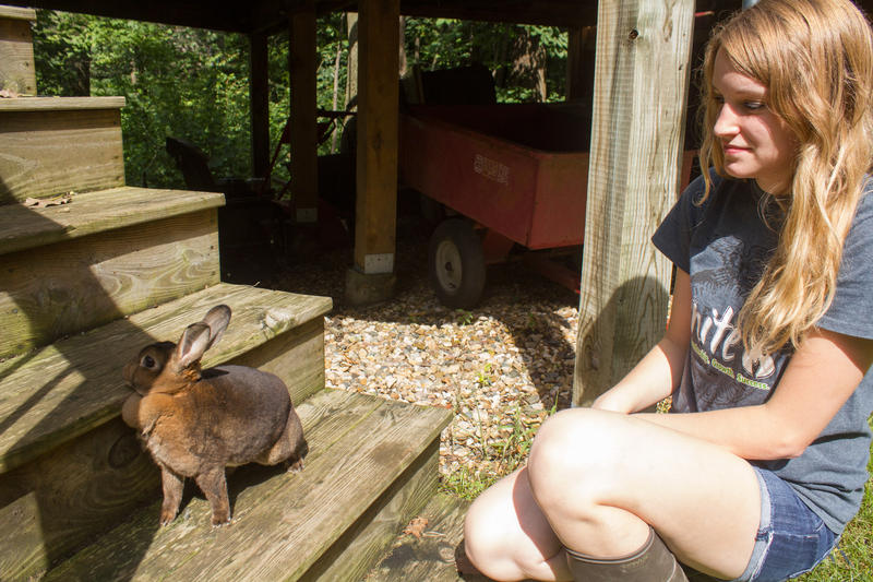 Ally watches one of her show rabbits while it gets some exercise. Ally says many kids interested in showing animals start with rabbits because they're relatively inexpensive and easy to care for.
