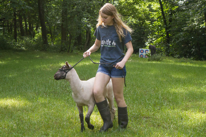 This is the first sheep Ally Babcock has raised. She has trained the lamb by putting a rope harness on him and walking with him around the backyard, with its trampoline and swingset.