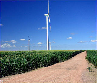 Wind turbines in a corn field
