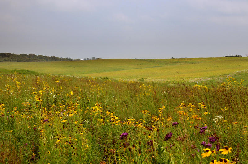 maintaining prairie landscape