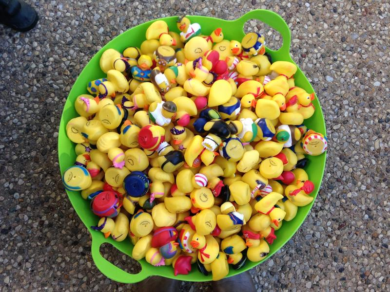Some of the rubber ducks Progress Iowa delivered to Gov. Terry Branstad in protest of his vetoing one time education and mental health funding.