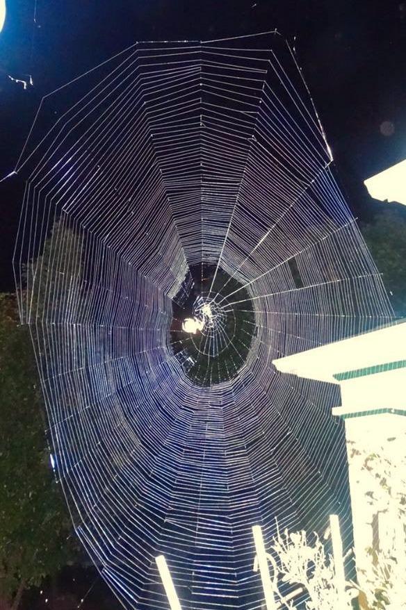 an orb weaver spider web