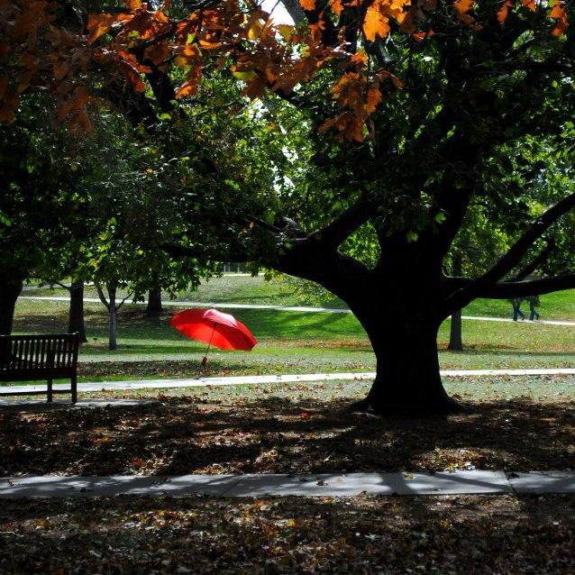 Earlier this month, Luther College's chapter of Active Minds raised awareness for mental illness with red umbrellas with statistics and resources sprinkled throughout their campus.