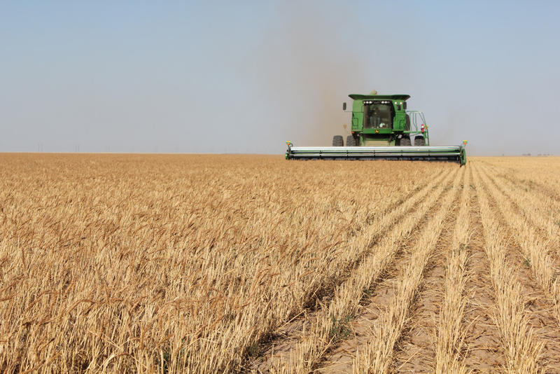 Farmers in the Wheat Belt cut their seeded acres.