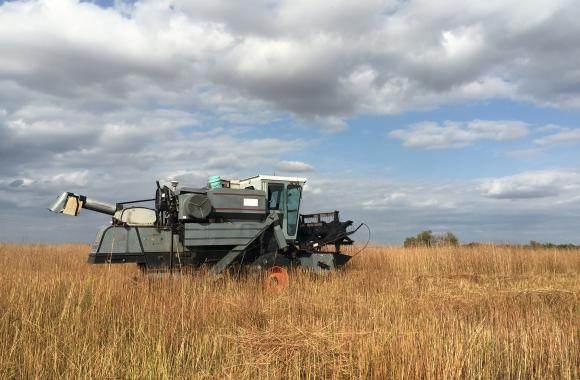 A combine rolls through a Nebraska prairie to collect grass seed.