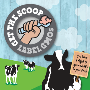 Ben & Jerry's, a Vermont company, supports labeling food that has genetically-modified ingredients. It supported Vermont's law that requires such labels, set to begin in July.
