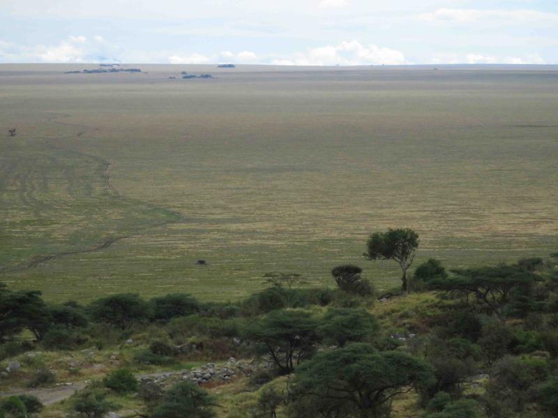 The highland woodlands become savannas and then stretch into seemingly endless grassland plains