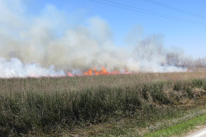 A controlled burn started by DNR workers reinvigorates the prairie.