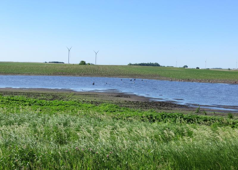 Standing water in some farm fields is better suited to water fowl than to crops right now.