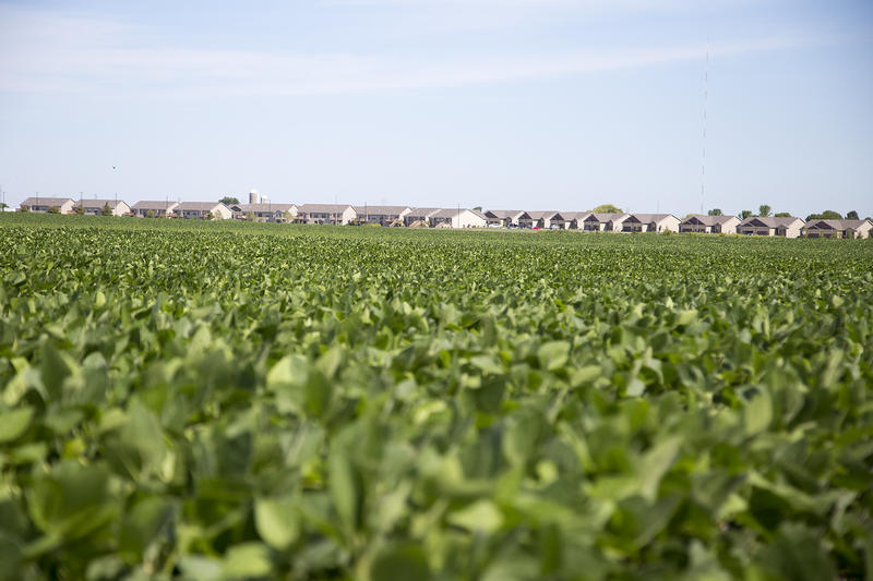 A soybean field separates several newer subdivisions on Ankeny's northern side.