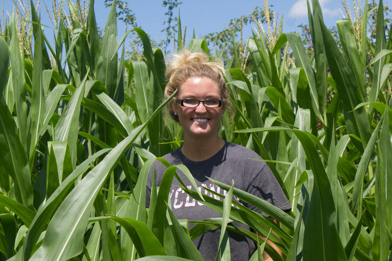Pictured in the corn fields of the student-managed farm she helped run this summer, Taryn Riediger is an aspiring farmer. She expects to work livestock for someone else before possibly returning to her family's farm.