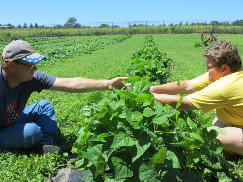 Gaylon Cochran and Megan DeGrange pick green beans at the Opportunity Village gardens in Clear Lake