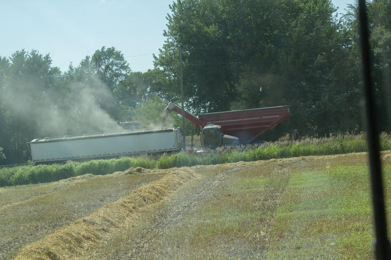 Oat grain moves from the wagon into a semi for transport to the local co-op. The straw left on the field will be baled and sold for animal bedding.