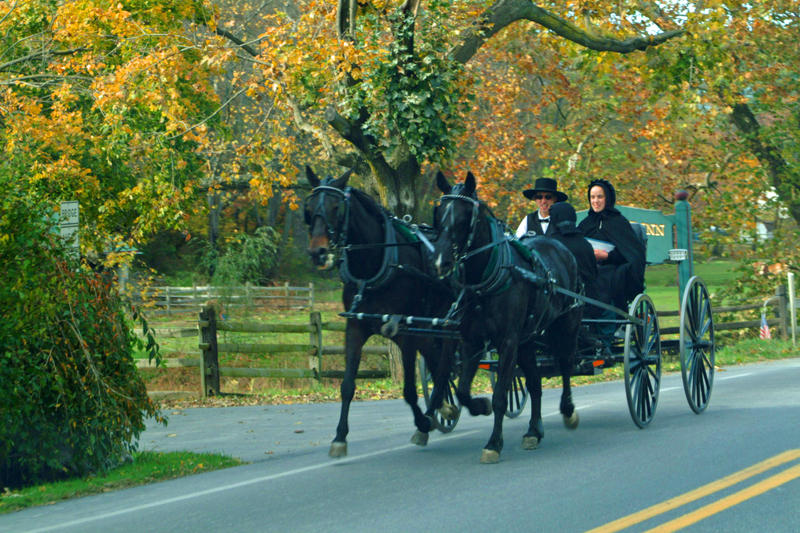 The proximity of some Amish colonies to livestock is shedding light on the formation of asthma and allergies.