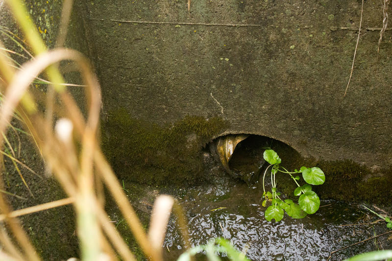 A tile drain that runs underneath one of Zylstra's farm fields brings water into this culvert under a county road.