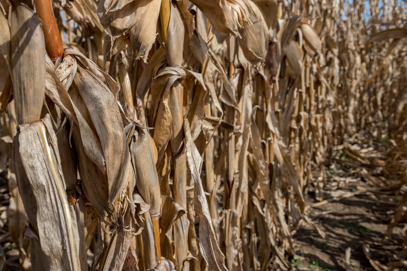 Eighty-six percent of Iowa's corn has been harvested.