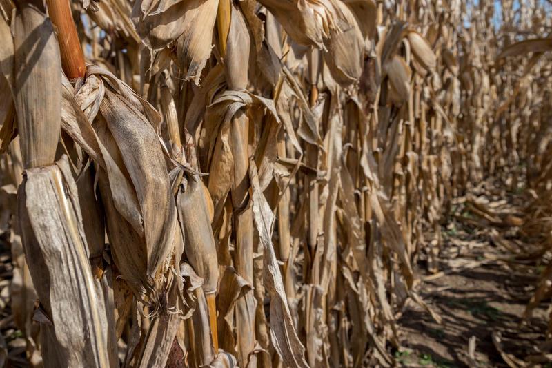 Eighty-six percent of Iowa's corn has been harvested.