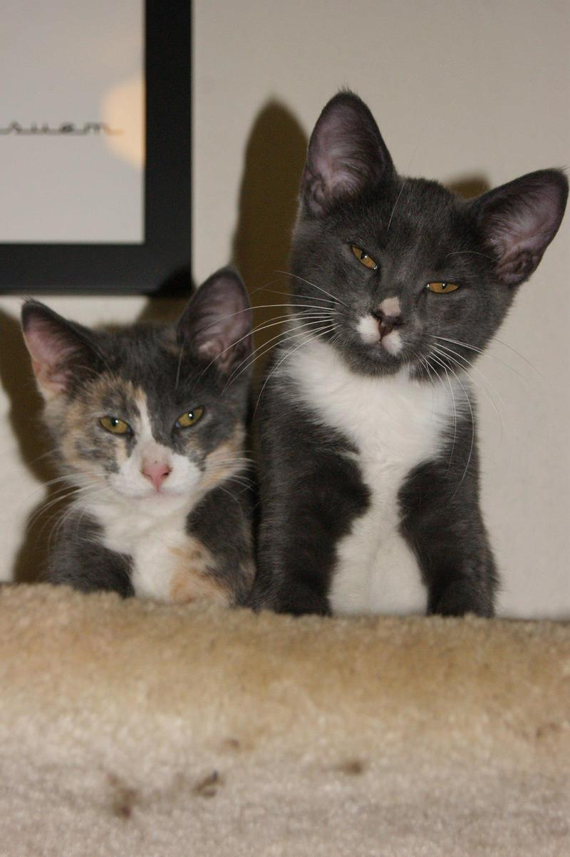 Callie and Magnum, two of Charity Nebbe's cats.