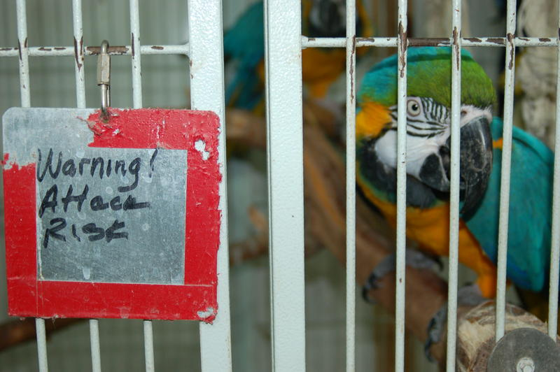 Some of the birds at Iowa Parrot Rescue are friendly with people, and some are not