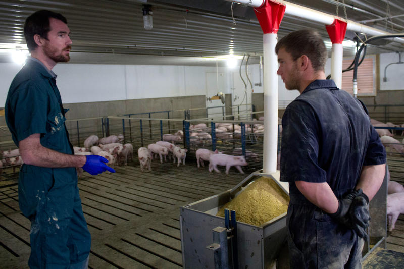 Paul Thomas discusses the current ration for these pigs with barn owner Brian Lundell.