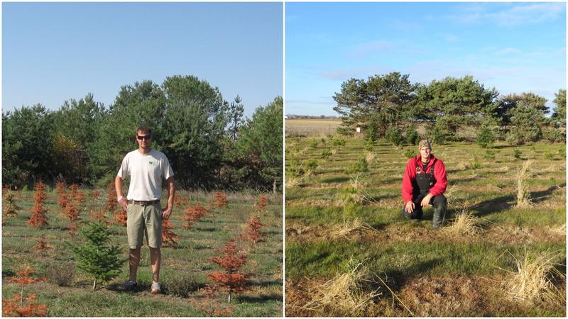 Danny Moulds at Kris Kringle Christmas Tree Farm in 2012 (left) after a devastating drought wiped out hundreds of seedlings, and the same spot in 2016.
