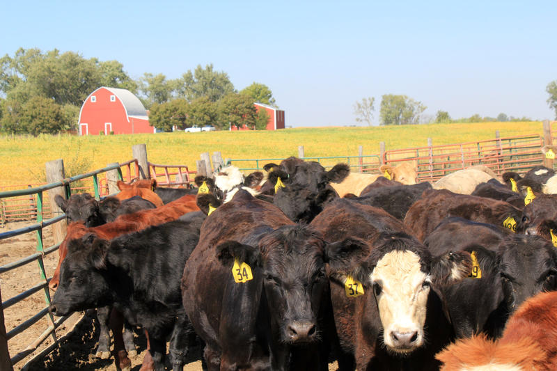 A bill Sen. Chuck Grassley plans to introduce would keep meat packing companies from owning livestock.