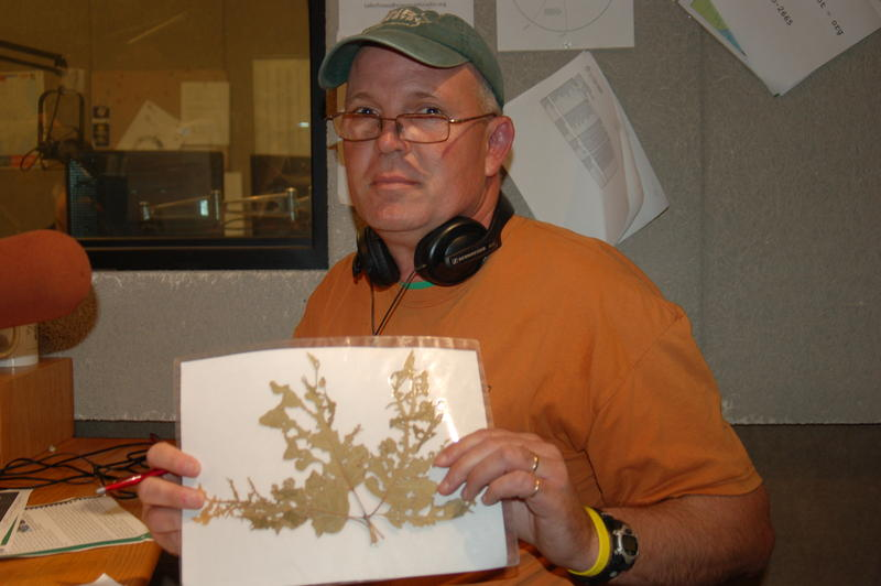 DNR district forester Mark Vitosh holds up an example of oak tatter, a problem likely caused by use of herbicides in agriculture.