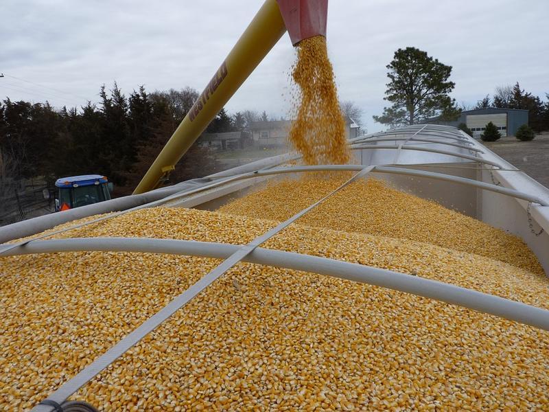 corn on truck