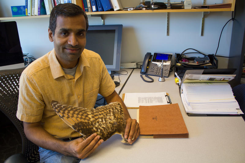 Aerospace engineering professor Anupam Sharma keeps an owl's wing in his office. It's the inspriation behind some of his work.