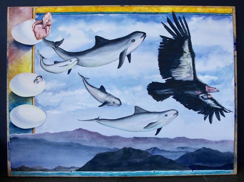 A painting by Barbara Taylor of vaquita porpoises
