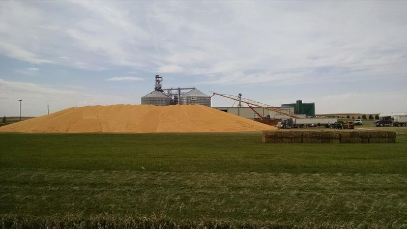 Corn is piled outside the Key Cooperative in Roland during harvest 2015.