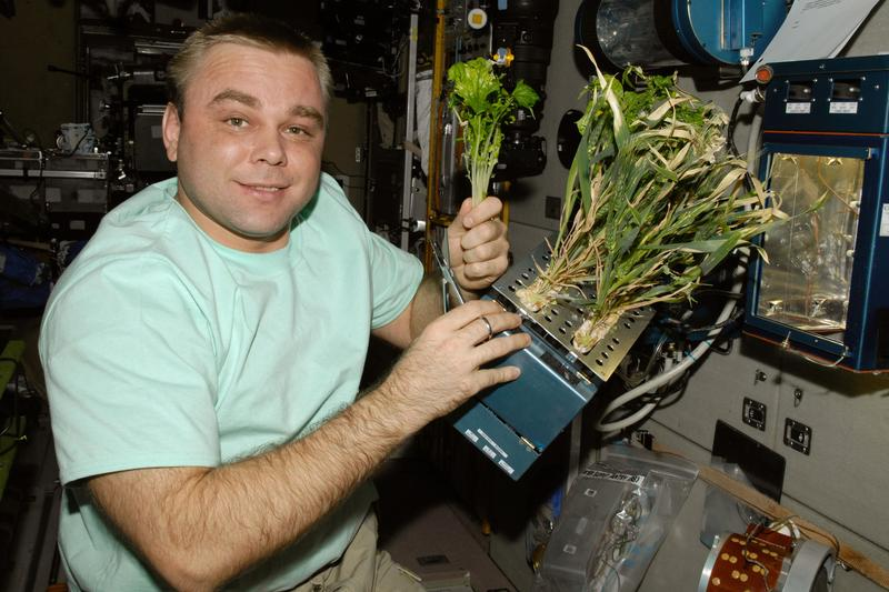 Cosmonaut Maxim Suraev, Expedition 22 Flight Engineer, holds Mizun lettuce plants in the Service Module on December 31, 2009.
