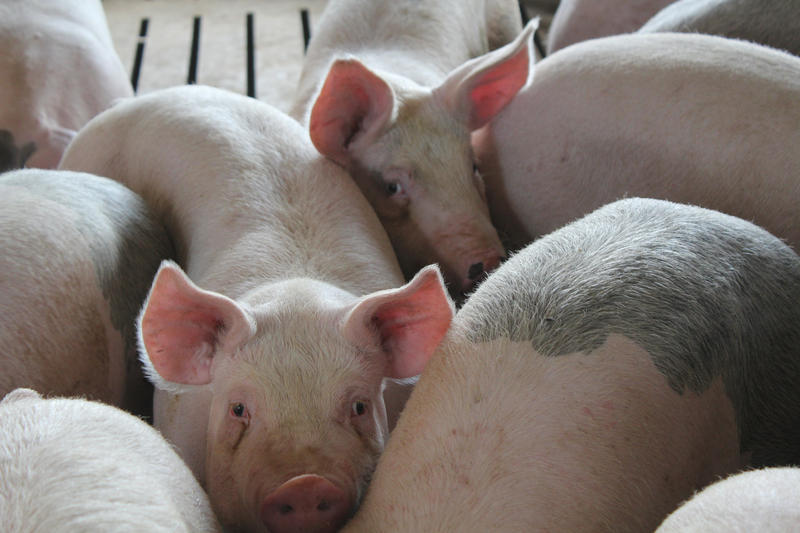 U.S. pork producers are reacting to new tariffs China imposed this week.