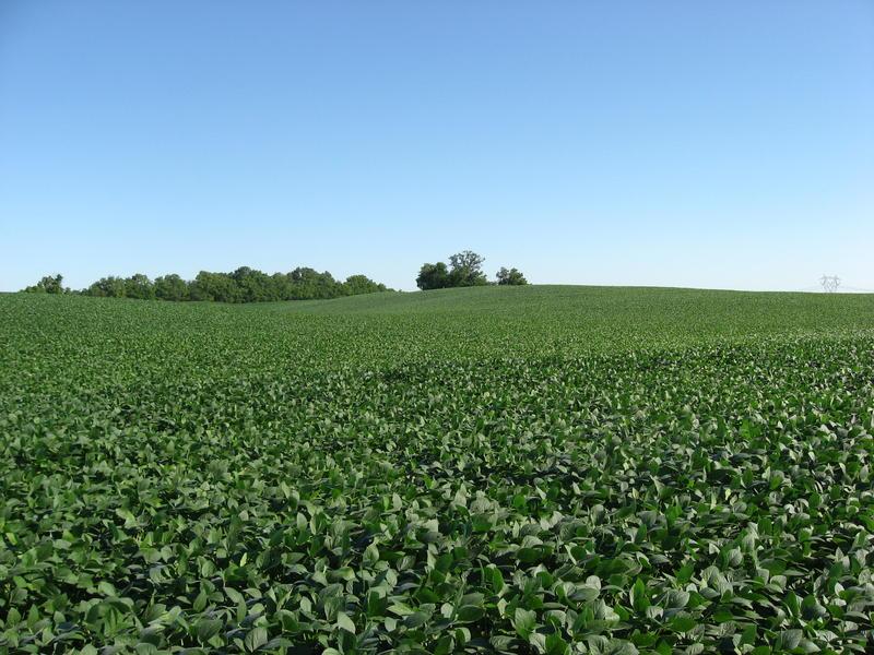 A soybean field in Ohio