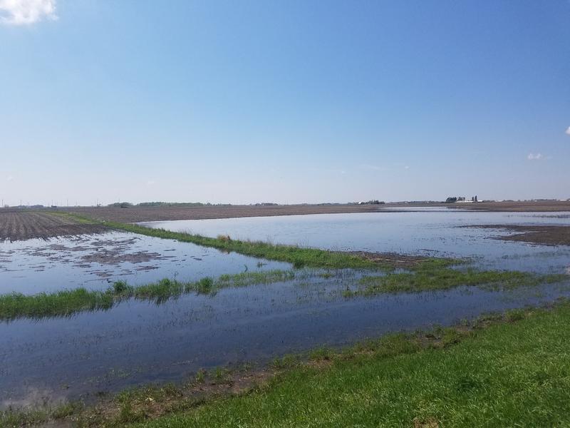 Three-quarters of the corn acreage in North Iowa is still unplanted.