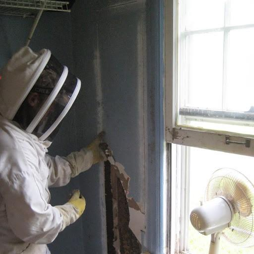 A bee removal specialist works on a so-called cut out in an abandoned house.