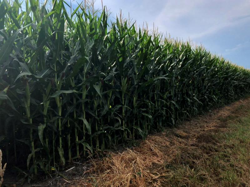 Washington County farmer Rob Stout uses conservation practices on his land to reduce nutrient runoff from fertilizers.