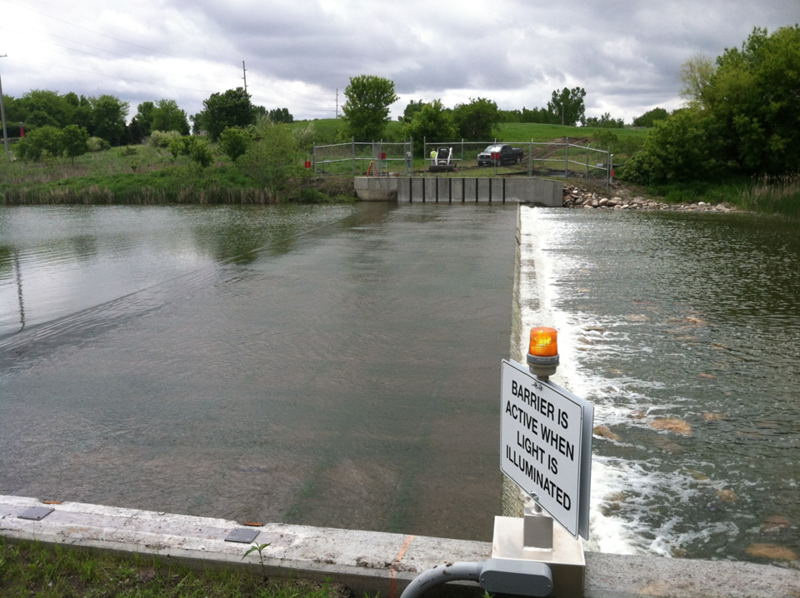 Scientists have detected Asian carp in a Dickinson County creek, near a barrier designed to stop them from getting through to the Iowa Great Lakes.