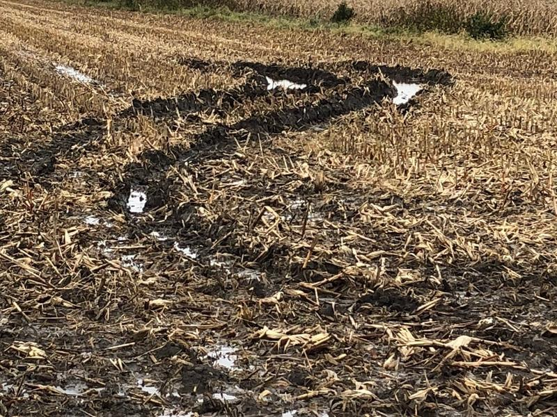 Muddy fields, like this one in Linn County, are making harvest difficult for a lot of Iowa farmers this week.
