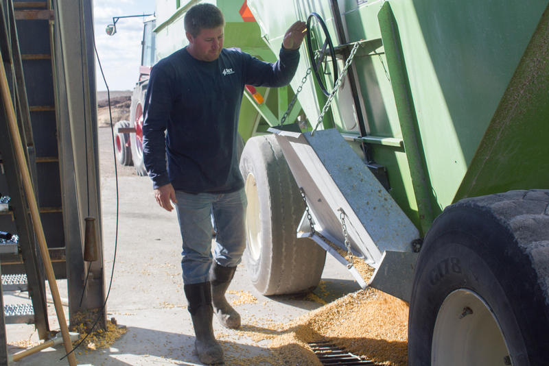 Nick Hadeland opens the hopper on a grain cart pulled into the Key Cooperative in Roland on a busy harvest day.
