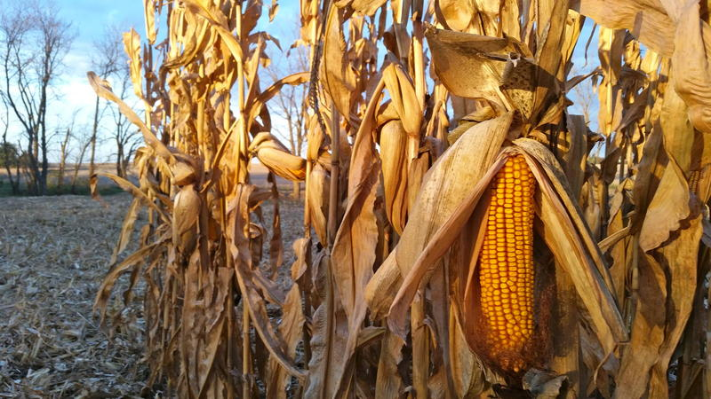 Iowa has produced the largest corn crop in the U.S. for almost two decades.