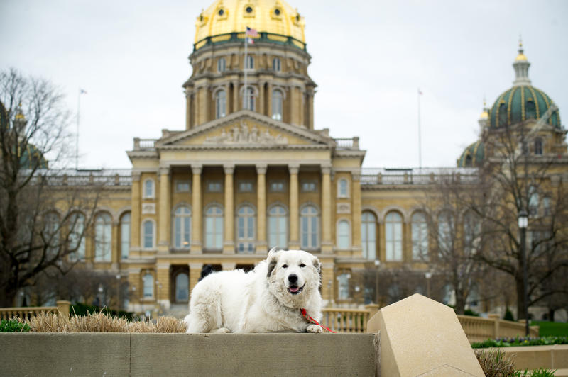 Adopted dog, Bear, in front of the Iowa Statehouse