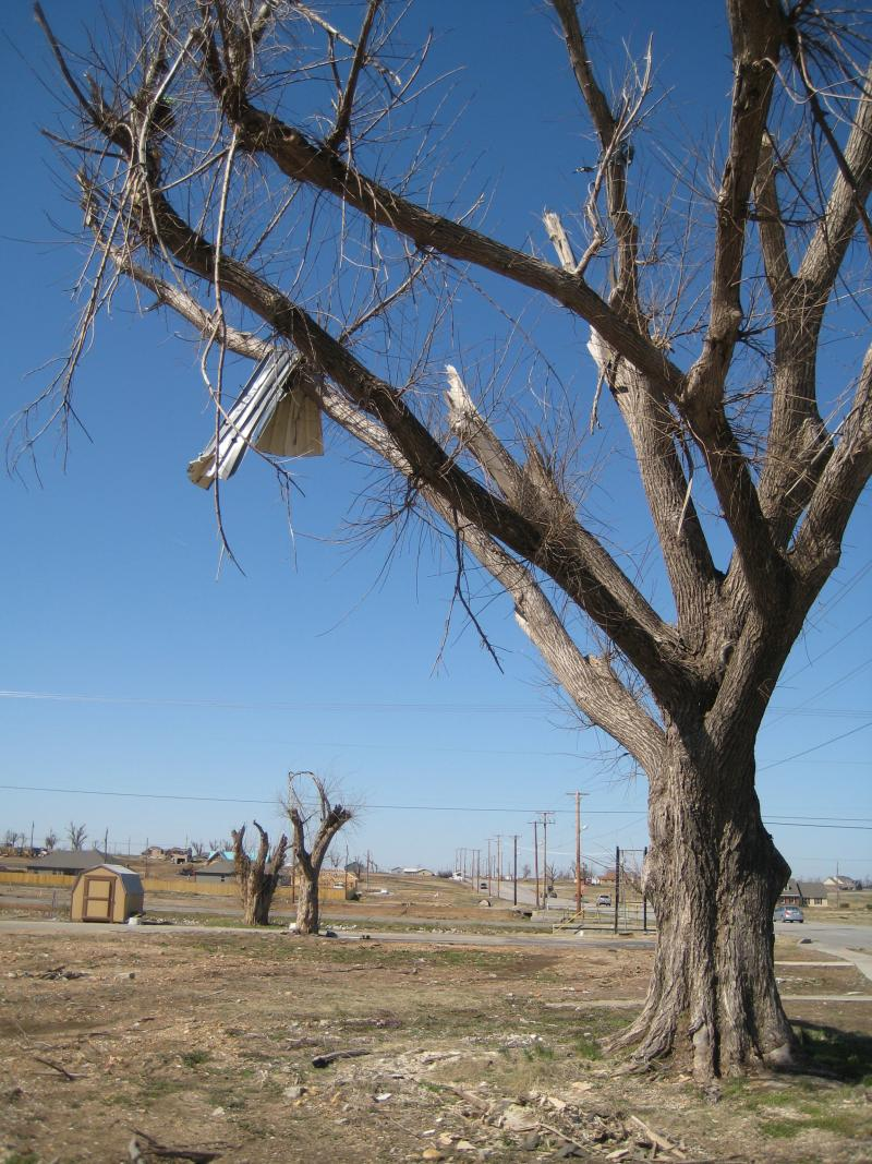 A former neighborhood in Joplin ten months after the tornado.