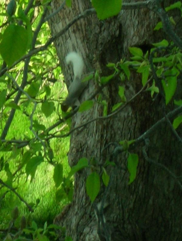 Listeners Patty and Jary Ernberger sent in this picture of a white-tail squirrel, just outside of their home in Cedar Rapids.